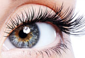 Master Voume Lash Training London Ontario